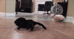 Denne kattungen møter en gigantisk lekeedderkopp på gulvet. Det som skjedde videre er bare herlig morsomt.