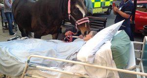 Denne kvinnens siste ønske ble oppfylt bare timer før hun døde. Hesten rørte alle med sin gest.