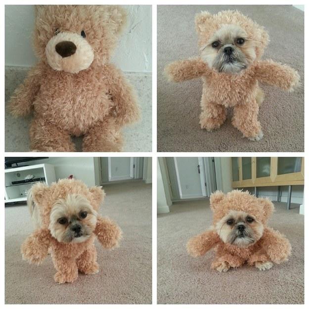 teddyhund4