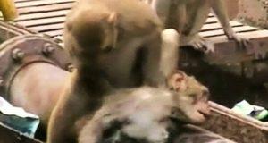 Da apen fikk elektrosjokk, brukte den heltemodige vennen hans 20 minutter på å gjenopplive ham.