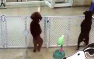 Denne dansende hundens reaksjon på å se eieren igjen, er hvorfor vi alle trenger en hund i våre liv.