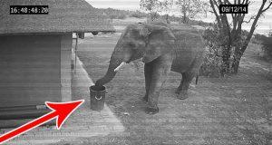 Du vil aldri tro hva denne ansvarlige elefanten ble tatt i å gjøre på et overvåkingskamera.