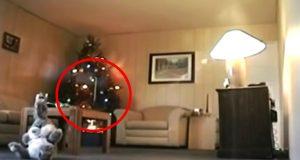 Brannfelle – på bare ett minutt. Se hvorfor du ALLTID skal slukke juletrelysene før du legger deg.