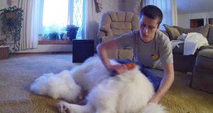 Han sitter seg ned for å børste hunden. På slutten kunne jeg ikke tro mine egne øyne.
