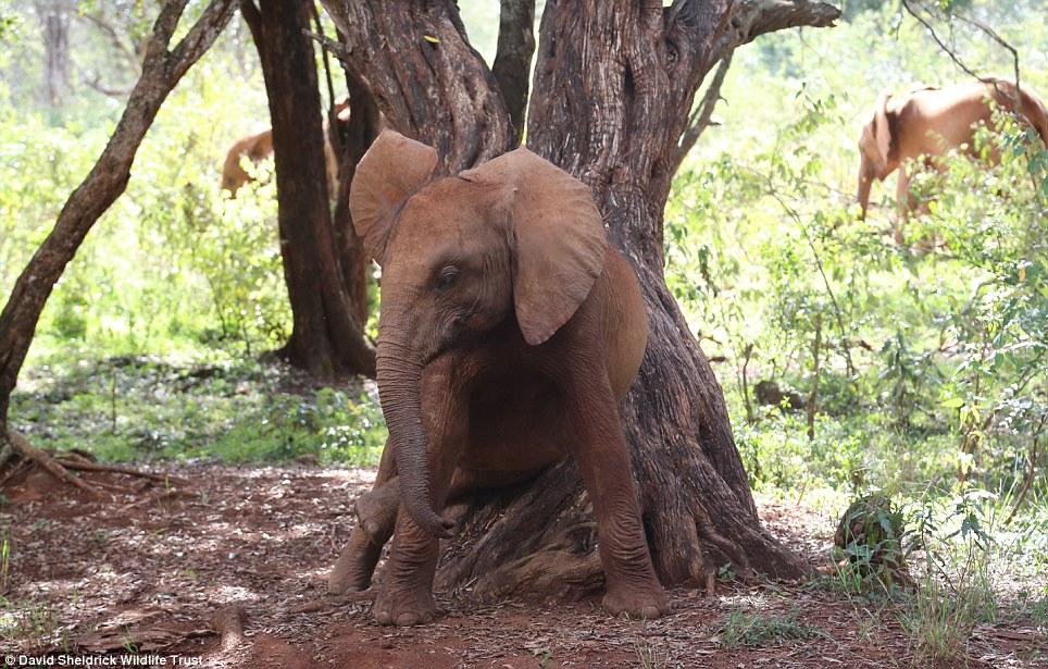 babyelefanter (13)