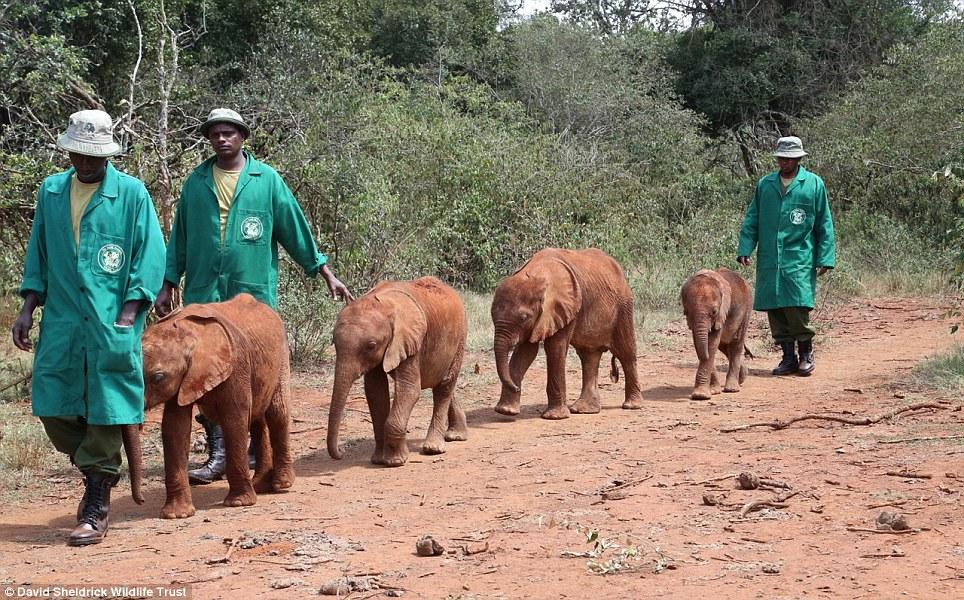 babyelefanter (4)