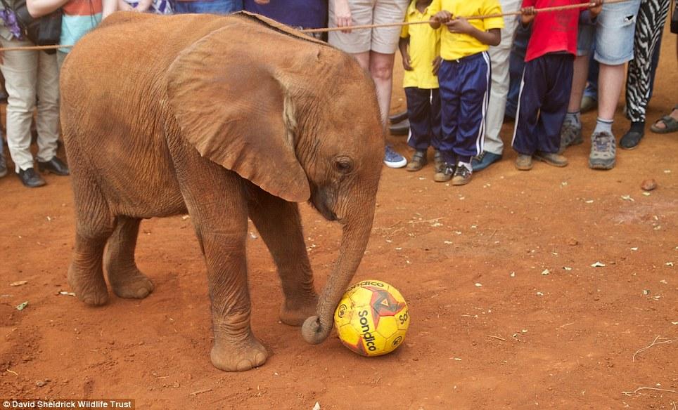babyelefanter (6)