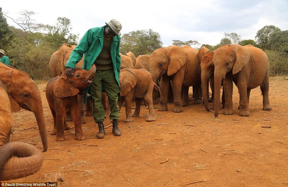 babyelefanter (9)