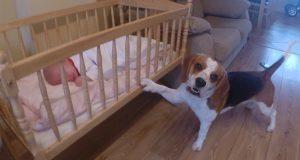 Babyen gråt, men til og med mamma ble sjokkert over hvordan hunden løste problemet.