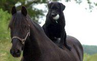 Disse 16 usannsynlige dyrevennskapene vil få deg til å smile til det gjør vondt.