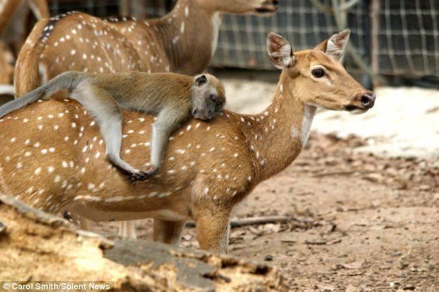 dyrevennskap (7)