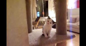 Ja, jeg døde akkurat… Denne kattungen drepte meg med den søteste mjauingen noensinne.