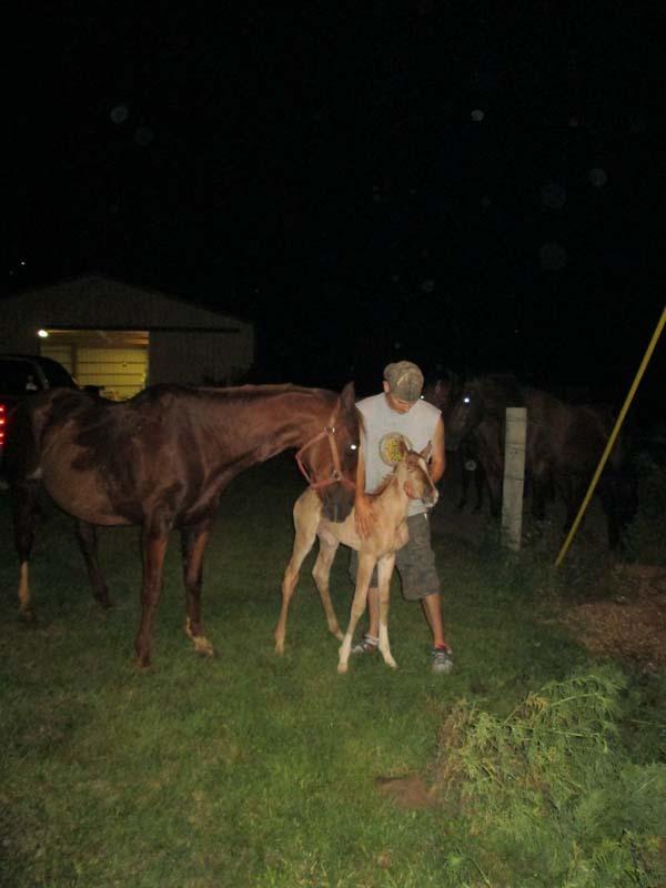 hest12