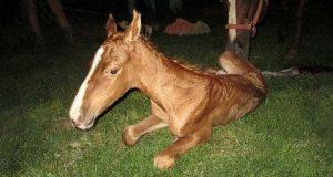 De kjøpte seg en hest, og tenkte alt var normalt – til dette skjedde midt på natten.