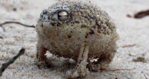 Denne lille frosken har den BESTE reaksjonen når noen kommer for nær.