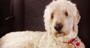 En hundeeier satte et kamera på hunden sin i en hel dag. Og det han så knuste hjertet hans.