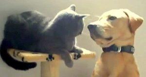 Han prøver å bli venner, men kattens reaksjon fikk meg til å bryte ut i latter.