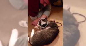 Når han prøver å gå tur med katten, gjør den hysterisk nok DETTE.