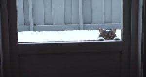 Han var nervøs over å flytte inn med en ny kjæreste som eide en katt. Sånn er livet hans nå.