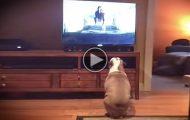Denne hunden ser sin favorittreklame på TV, og reaksjonen hennes er helt uvurderlig.
