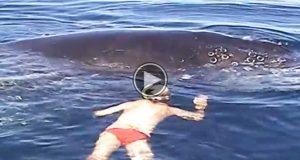 Han svømmer mot denne hvalen med en kniv, idet noe uventet skjer.