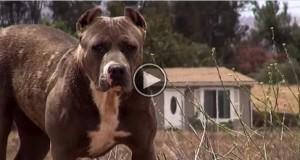 Forsiktig nærmer de seg denne «skumle» hunden. Vent til du ser hva som skjedde videre.