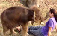 Dette. Blir. For. Mye. OMG. Kan denne babyelefanten bli noe søtere?