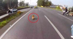 Det disse bikerne gjør for å redde denne hunden som løper midt i motorveien, er utrolig.