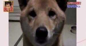 Hun ber hunden om å ikke bjeffe så høyt. Det han så gjør er bedårende.