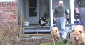 Det ser ut som han bare lufter hunden sin, men se nærmere. Tårene rant.