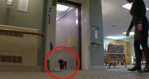 Hver dag går denne hunden en tur på egenhånd som vil få tårene dine til å renne.