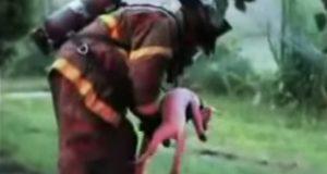Brannmenn redder to hunder fra et brennende hjem. Dette er bortenfor fantastisk.