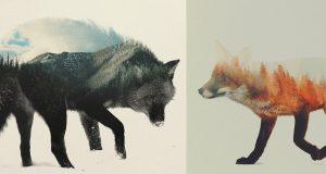 Han finner gratis bilder av dyr og deres landskap og smelter dem sammen på en fantastisk måte.