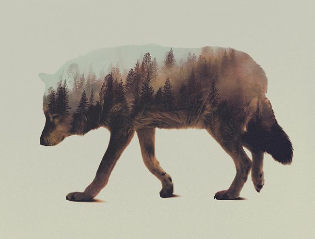 dyr-landskap (3)