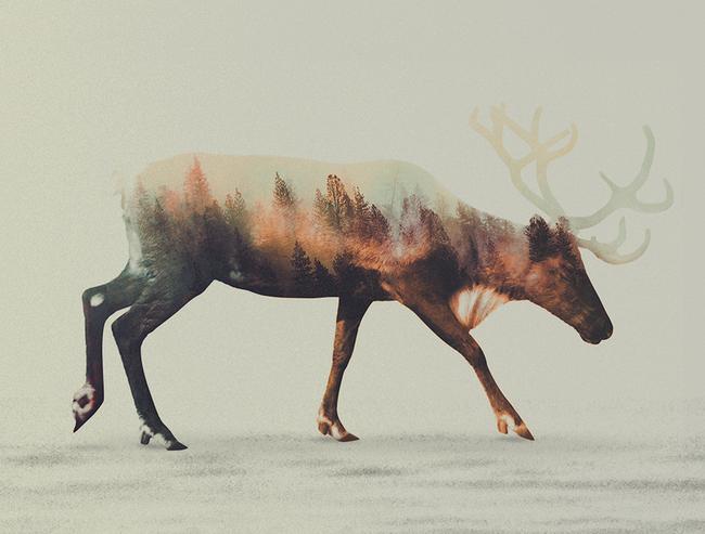 dyr-landskap (5)