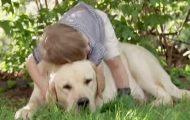 Han kryper opp på ryggen til denne hunden. Det som skjer videre får det til å stråle i hjertet.