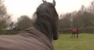 Hestene var fra hverandre i 4 år. Men når de gjenforenes i hagen? Vidunderlig.