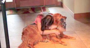 Hun følte seg skyldig for å forlate hunden hjemme. «Løsningen» hennes har forbløffet mange.