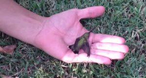 Etter at jeg så hvorfor han reddet denne kolibrien, er det ÉN ting jeg ALDRI kommer til å gjøre igjen.