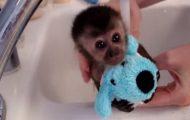 Denne lille apens baderitual er så søtt at jeg nesten dør.