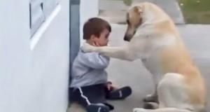 Hund går bort til denne gutten med Downs syndrom og viser kjærlighet på den søteste måten.