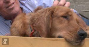Denne blinde hunden ble etterlatt for å dø, men fikk en ny sjanse av omsorgsfulle mennesker.