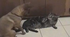 Da denne hunden oppsøkte familiens katt, skjedde det noe hysterisk morsomt.