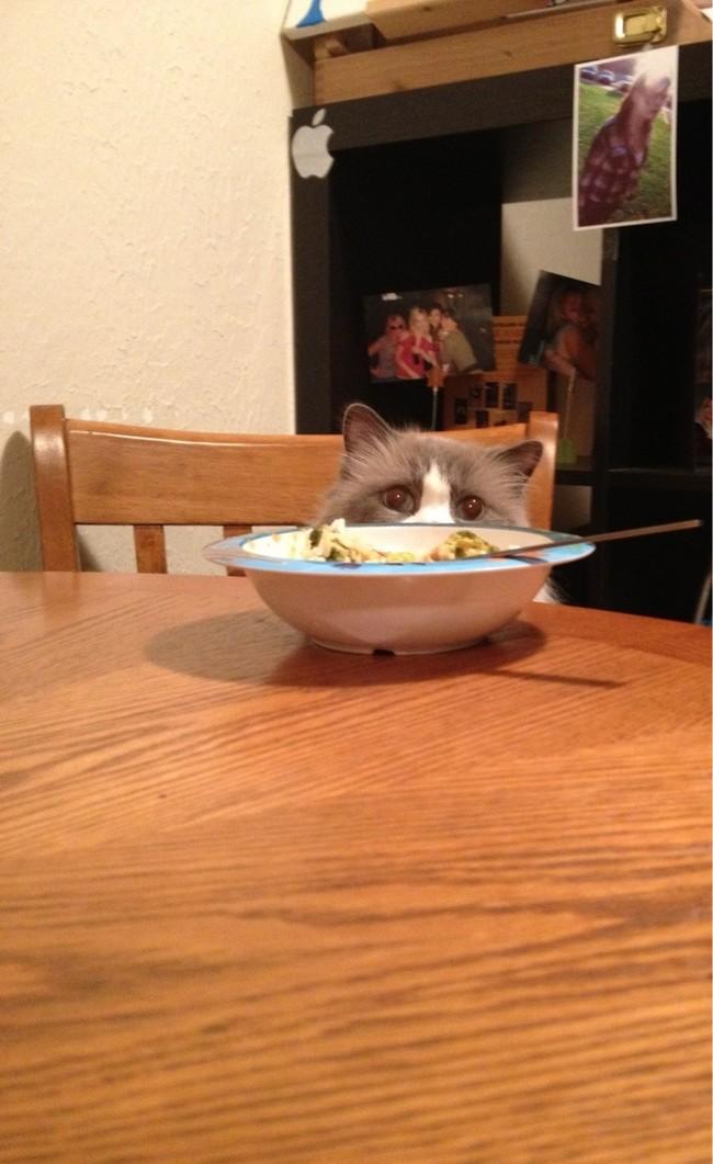 middag (16)