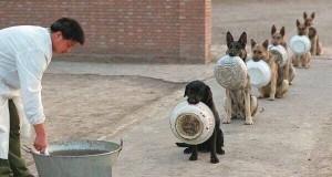Det er middagstid, og disse kjæledyrene har alle sine hysterisk morsomme ritualer.