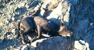 En turgåer fant en døende pitbull på fjellet. Den forferdelige sannheten er sjokkerende.