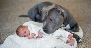 Han ville ikke ha hunden nær sin datter, men hundens utrolige gjerning, endret pappas syn for alltid.