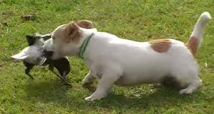 Jeg trodde denne hunden angrep fuglen, men det som egentlig skjer er FANTASTISK.