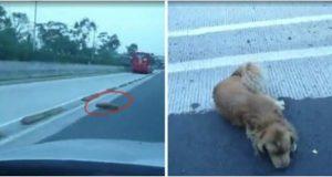 Alle kjørte bare forbi den påkjørte hunden, utenom én mann. Det forandret livet hans for alltid.