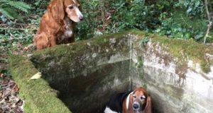 Denne stakkars hunden var fanget her nede i en uke, men bestevennen forlot aldri hennes side.